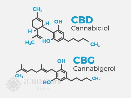 cbg vs cbd molecular