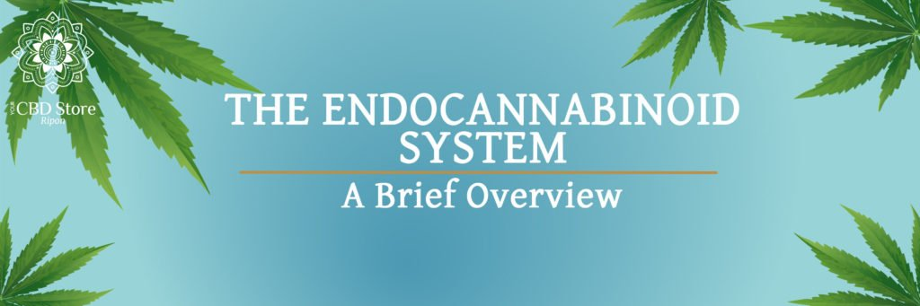 The Endocannabinoid System - Ripon Naturals/My CBD Store