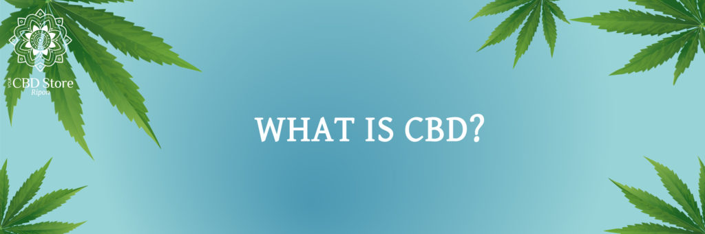 what is cbd? - Ripon Naturals